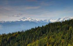 Pine forest in Karavanke range with snowy Julian Alps, Slovenia. Sunny autumn pine forests in Karavanke range with Pokljuka plateau and Debela pec, Triglav Royalty Free Stock Photos