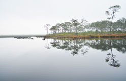 Pine forest and lagoon Stock Images
