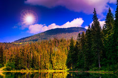 Pine forest and lake near the mountain Royalty Free Stock Image