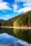Pine forest and lake near the mountain early in the morning Stock Photography