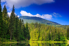 Pine forest and lake near the mountain early in the morning. View on lake near the pine forest early in the morning on mountain background Royalty Free Stock Image