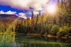 Pine forest and lake near the mountain early in the morning Stock Image
