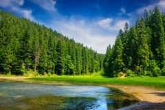 Pine forest and lake near the mountain early in the morning Royalty Free Stock Photos