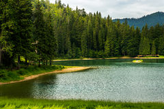 Pine forest and lake near the mountain early in the morning Stock Images
