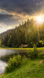 Pine forest and lake near the mountain early in the morning Royalty Free Stock Photography