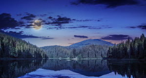 Pine forest and lake near the mountain early at night Royalty Free Stock Photos