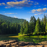 Pine forest and lake near mountain in morning Royalty Free Stock Photography