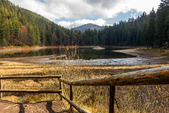 Pine forest and lake near the mountain Stock Photo