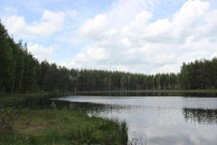 Pine forest and lake. Stock Image