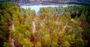 Pine forest and lake. Lake scenery aerial view and pine forest. Spring season royalty free stock photography