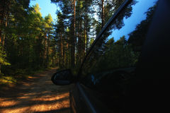Pine forest landscape Royalty Free Stock Photos