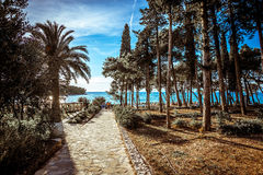 Pine forest at Mediterranean coast. Pine and palm forest at Adriatic sea beach Stock Photos