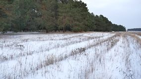 Pine forest motion winter christmas tree snow field in winter nature beautiful landscape. Pine forest motion winter christmas tree snow field winter nature stock video