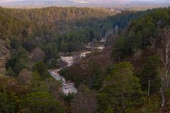 Pine forest and mountain stream in Cairngorms National Park. Near Aviemore Stock Images