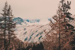 Pine forest in the mountain valley. Beautiful view of the mountain range stock image