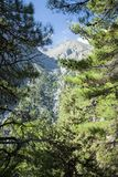 Pine forest in the mountains. Beautiful mountain landscape. Samaria Gorge Crete, Greece royalty free stock photography