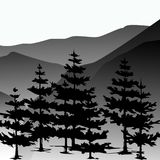 Pine forest and mountains vector backgrounds. Stock Photos