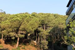 Pine forest on the mountainside in a small town in Catalonia. stock photography
