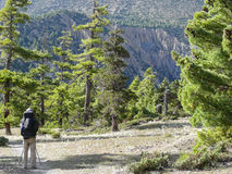 Pine forest near Ngawal, Nepal Stock Photo