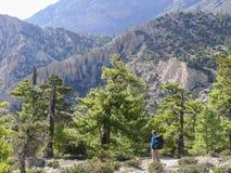 Pine forest near Ngawal, Nepal Stock Photos