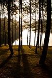 Pine forest  at Pang Aung Stock Images