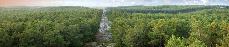 Pine forest panorama. Wide panorama of pine forest with fireline protection, hourtin forest, gironde france royalty free stock photos