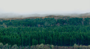 Pine forest panorama aerial view in misty rainy day in Scotland Stock Photo