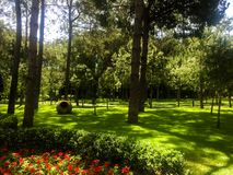 Pine forest panorama in summer. Close up background stock images