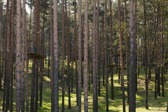 Pine forest park Stock Photography