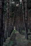 Pine forest path . natural . Stock Photo