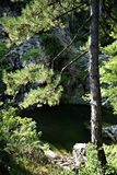 Pine Forest Pond. Small pond with clear green water hidden in pine forest at sunny summer day Stock Image