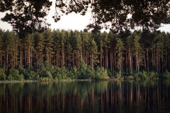 Pine forest reflecting in the water Royalty Free Stock Photography