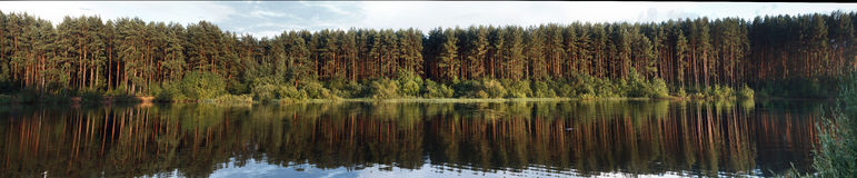 Pine forest reflecting in the water Stock Photography