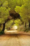 Pine Forest Road Royalty Free Stock Images