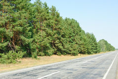 Pine forest and road on blue sky background Stock Image
