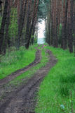Pine forest road. A road cutting through a pine trees forest. Exclusive here Royalty Free Stock Photos