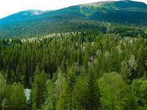 Pine Forest. Road Tripping through to the Canadian Rockies in summer Royalty Free Stock Photos