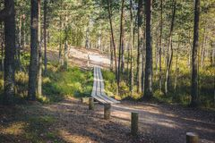 Pine forest scene. Bog boardwalk is a popular tourist destination in Kemeri National park stock photo