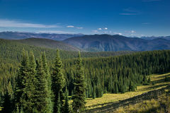 Pine forest scenics in Canada Stock Images