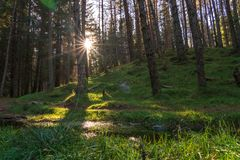 Pine forest in Scotland. A pine forest along the Cateran trail in Perthshire, Scotland stock images