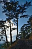 Pine forest at sea coast in Crimea royalty free stock photos