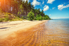 Pine forest on the seashore Stock Images