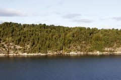 Pine forest on the shore of the fjord. Stony hill covered with pine forest on the shore of the fjord Royalty Free Stock Images
