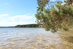 Pine forest on the shore of the lake Stock Images