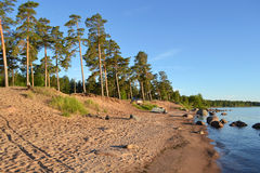 Pine forest on the shores of Lake Ladoga Royalty Free Stock Photos