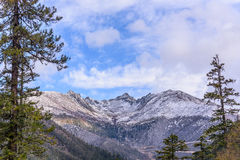 Pine forest with snow mountain and sky. Pine forest with snow mountain and blue sky Royalty Free Stock Photo