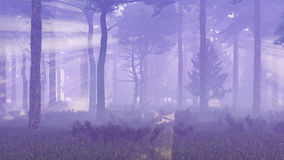 Pine forest with sunlight and fog Stock Image