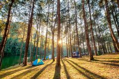 Pine forest sunlight shine on reservoir at sunset. Pang oung,mae hong son,thailand Stock Images