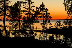 Pine forest at sunset, Karelia, Russia royalty free stock images