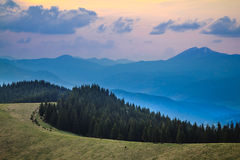 Pine forest at the sunset. Twilight over pine forest in the Carpathian mountain royalty free stock photos